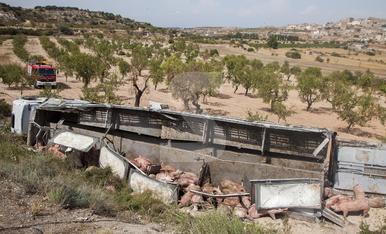 © Un camión de cerdos cae por un terraplén en Maldà