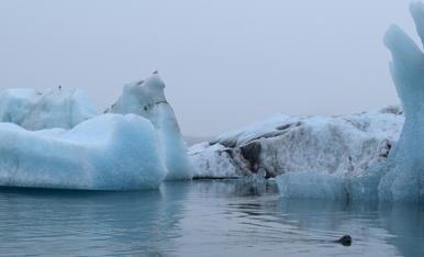 Llac glaciar Jökulsárlón a Islàndia. Amb el fred apareixen grans icebergs i foques com es veu a la imatge.