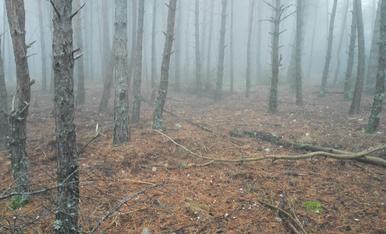 Ager bosc amb boira