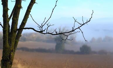 Fred boira i humitat. Gotes d´aigua, paisatge de matinada la boira va i be, els colors es desfant com en una aiguada
