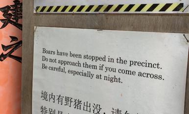menys mal que els boars han estat parats al precinte!