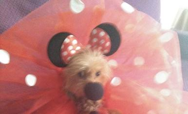 Nino , disfraçat de Minnie Mousse se va portar molt be!