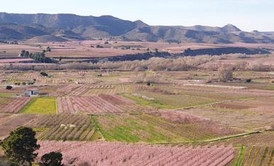 Camps florits a La Granja d'Escarp