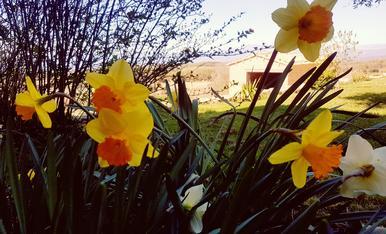que bonica es la primavera,Magda Bach.