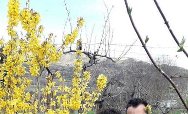 Primavera florida