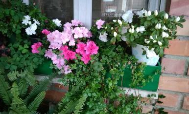 La meva terrassa és el meu petit paradís