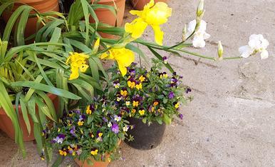 el meu jardi preferit,les flors de casa,Magda Bach.