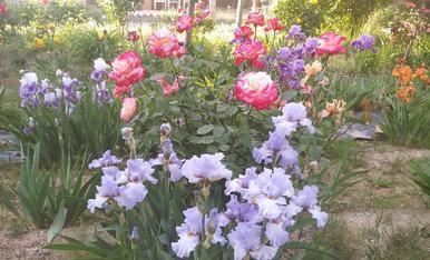 Mi jardín es una explosión de color