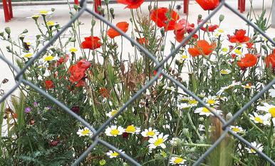 minimització de un jardí espontani amb l'entorn