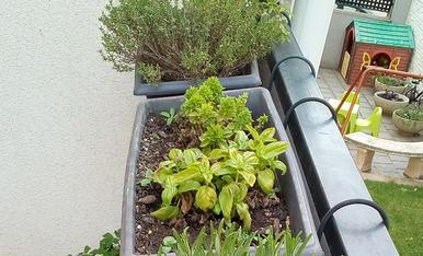 Les meves plantes aromàtiques