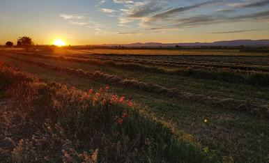 Posta de sol daurada al Pla d'Urgell