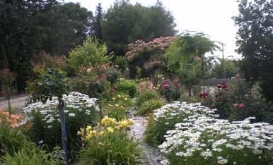 Una muestra de las muchas flores de mi jardin