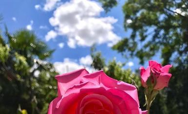 Senzillament, enamorada del sol. Judit Piqueras C/Ferrer i Busquets 119 4.2. (25230) Mollerussa T.687547317