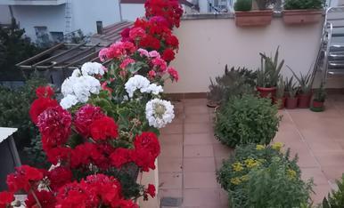 Passadís floral. Donem la benvinguda a l'estiu 2019.