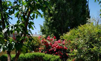 El meu jardí, 2019