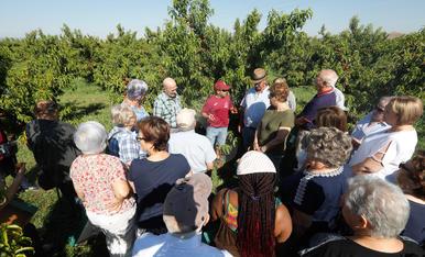 Campanya turística basada en la fruita a Aitona