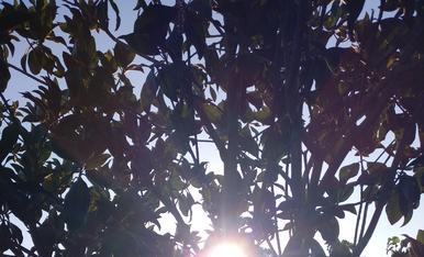 Salida del sol es vida y la vida está compuesta de pequeñas cosas.