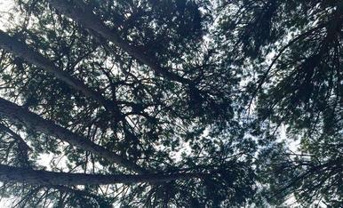 Mirar el cel sobre la manteta del picnic... res mes ..
