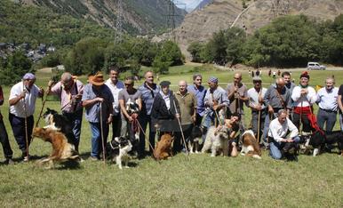 Concurs de Gossos d'Atura 2019
