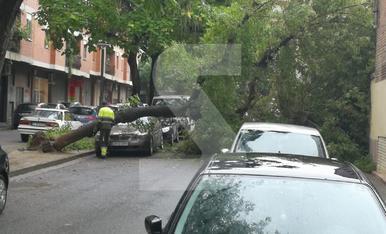 © Árboles caídos en Lleida tras la lluvia
