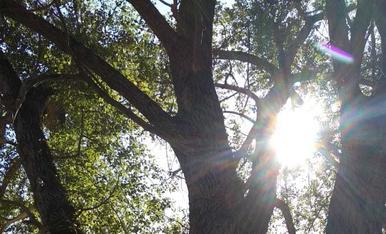 Un gran arbre per un gran dia!!