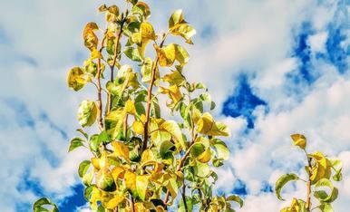 Entre grocs marron i algun  verd.....  pero encara 27 graus ..