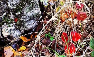 Metamorfosi dels colors de la tardor