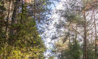 Un passeig pels boscos de Lladurs