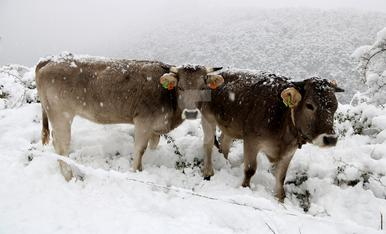 © La nieve llega a todo el Pirineo