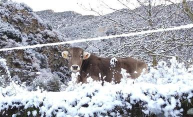 Tots disfrutem de la neu
