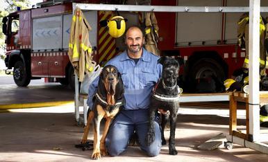 © Gossos que poden salvar vides