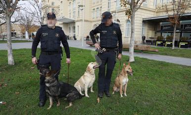 © Unos perros al servicio de la ley