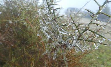 Desglaç.  Amb la boira pixanera i les baixes temperatures, les plantes van quedar cobertes d'una petita capa de glaç. En el moment de fer la foto, és produïa el desglaç.