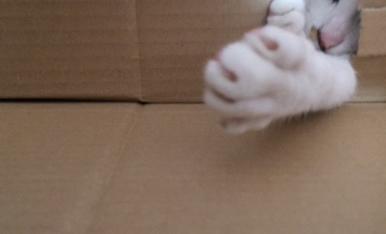 Missi jugando con las cajas