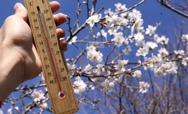© Primavera en ple febrer