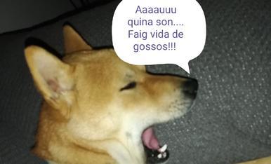 Es el wonder el gos de l'Oriol el meu fill