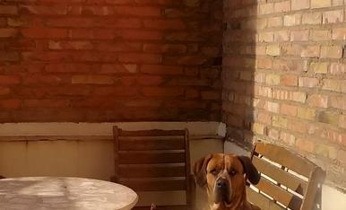 Este es Bruno,mi torpe pero encantadora mascota...sin duda el rey de la casa.