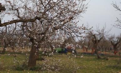 © Més turisme pels camps en flor