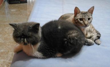 Mis mascotas Hommer y Willy, están en su momento de relax.
