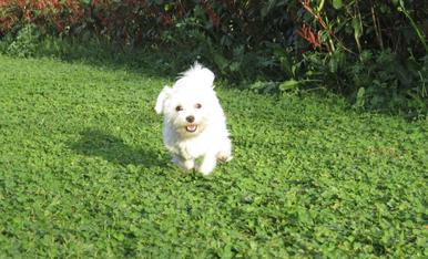 Em dic Minnie i m'encanta córrer i saltar,  sobretot quan fa solet!