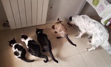 A dinar ! De dreta a esquerra la Pandy, la Misha, la Nit, la Yuqi i l'Àgatha són molt golafres i sempre mengen juntes.
