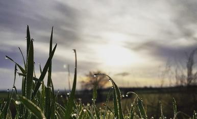 Les gotes de l'albada que alimenten la nostra terra