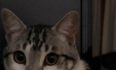 """Julivert, """"petit"""" gat de 9 mesos"""