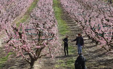 Rutes als fruiters florits 2020