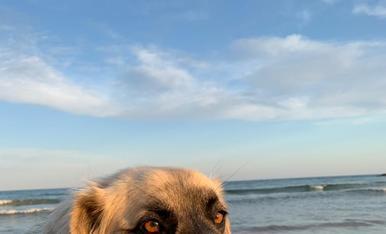 Mel, li encanta l'aigua, jugar a pilota i que li toquin la pantxeta. Sempre ens dona petonets a la cara i molt mimoseta, li encanta el mar i la piscina.