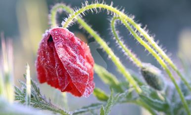 © Gelades al març que malmeten la fruita