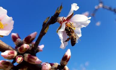 Mentre nosaltres ens quedem a casa les treballadores abelles fan la seva feina