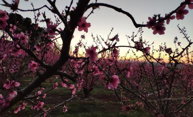 La Primavera d'AITONA