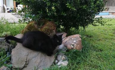 La Misha descansant després d'una llarga estona jugant!
