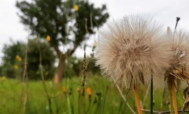 Segons de llibertat per assaborir la bellesa de la natura